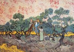 huile d'olive nouvelle,vallée des baux,recettes
